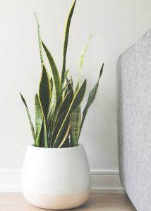 white vase green plant sofa